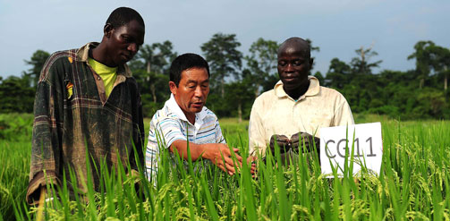 "The Chinese presence in African agriculture – ""invasion"" or cooperation?"